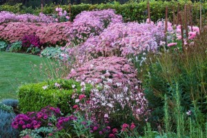 pink garden bed at Ulting Wick Garden
